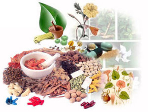 Indian medicinal herb may control high blood sugar and diabetes, finds study