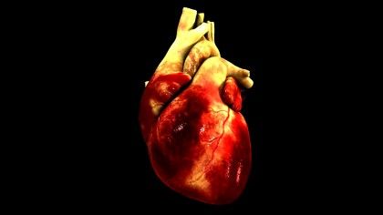 Breakthrough : Miniature human hearts created from rat hearts
