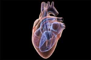High-carb shakes can hamper heart function