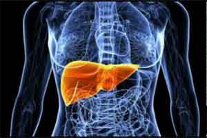 Soybean oil causes less obesity and insulin resistance but is harmful to liver function