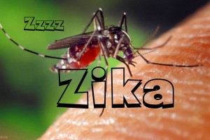 Zika infection caused by one virus serotype: study