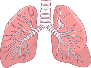 Menopausal women experience an accelerated decline in lung function