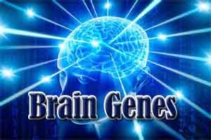 Brain genes can be damaged due to High-fructose diet
