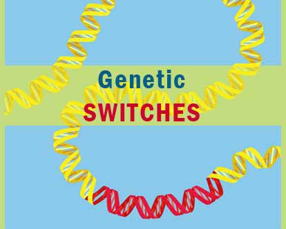 Study Claims Genetic Switches Can Increase Lifespan