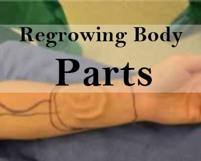 Regrowing Body Parts Closer to Reality