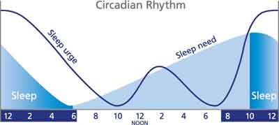 Powering up the circadian rhythm