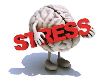 Stress can lead to structural changes in brain