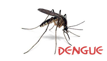 Dengue virus exposure may amplify Zika infection