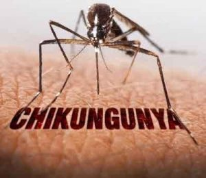 Elderly succumbing to chikungunya due to low immunity, chronic health issues