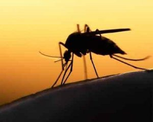 First ever human case of mosquito borne Keystone virus identified