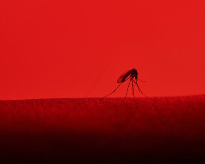 Malaria parasite evades rapid test detection in children