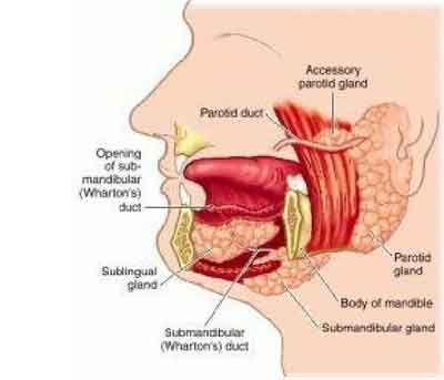 Submandibular Sialadenitis – Standard Treatment Guidelines