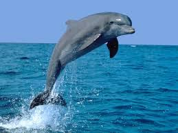 Dolphin genes could help treat kidney failure