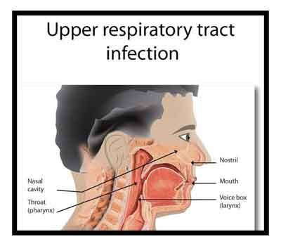 icmr antimicrobial guidelines for upper respiratory tract, Human Body