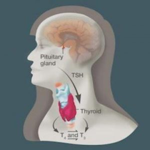 New guideline for amiodarone-related thyroid dysfunction