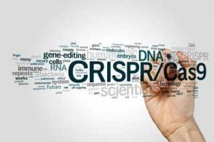 New crispr-based diagnostic platform unveiled
