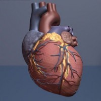 Galloping Heart: NEJM case report