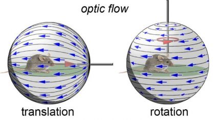 Specialized cells in the retina sense their owner's motion: Nature Study