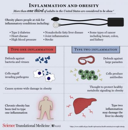 Type 2 inflammation might be good for the belly but bad for the liver