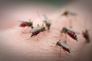 All febrile patients must be tested for malaria and dengue both
