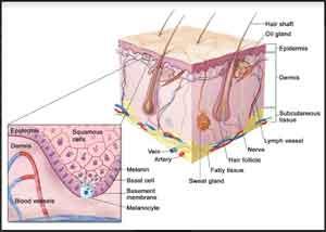 Adjuvant nivolumab superior to ipilimumab in surgically resected stage III/IV melanoma