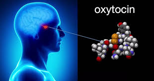 Oxytocin ,love hormone amplifies social interactions