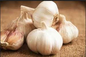 Consumption of garlic and onion may prevent colorectal cancer