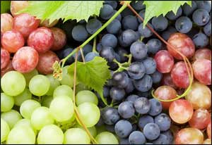 New depression drug may be derived from grapes