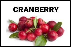 Cranberries could be a helpful tool in combating antibiotic resistance