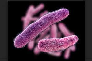 Shigella resistant to Cipro ,Azithromycin on the rise