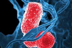 Karius Test detects life threatening pathogens faster than standard testing: Study