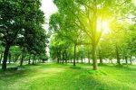 Green Neighbourhood decreases risk of heart disease: JAHA