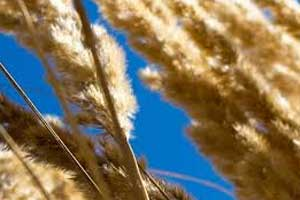 Common food additive cause of Celiac disease, finds new review
