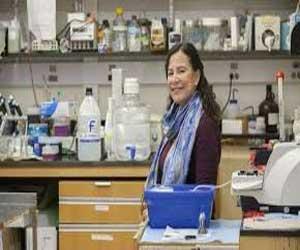 New study examines the way estrogen affects methamphetamine addiction