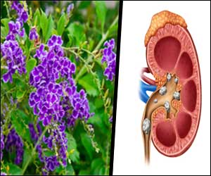 Golden Dewdrop (D. erecta) leaves may cure Kidney Stones, finds AYUSH study
