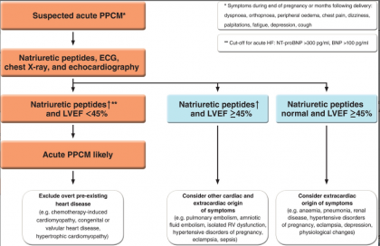 ESC guidelines for diagnosis and management of peripartum cardiomyopathy
