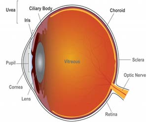 Two common uveitis drugs found equally effective in noninfectious uveitis in clinical trial: JAMA